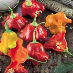 Buy 10 Seeds Bishop's Crown Chilli Pepper Benih Cili Malaysia