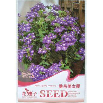 Harga FLOWER GODDESS G003 SEMI-TRAILING VERBENA 20SEEDS