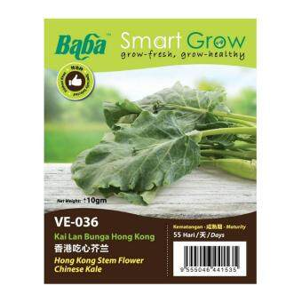 Harga Baba Smart Grow Seeds VE-036 Hong Kong Stem Flower Chinese Kale (Kai Lan Bunga Hong Kong) ±10G