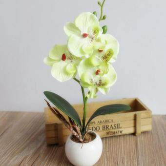 Harga Fancy Four Butterfly Orchid Bonsai Flower color:Green