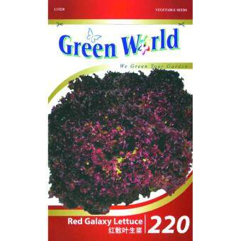 Harga Green World Seeds GW-220 Red Galaxy Lettuce 500 Seeds