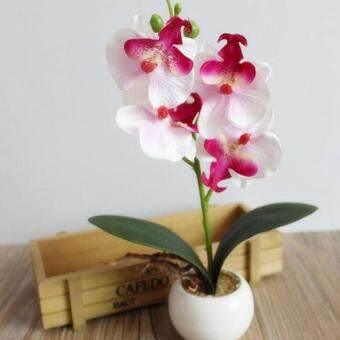 Harga Fancy Four Butterfly Orchid Bonsai Flower color:White