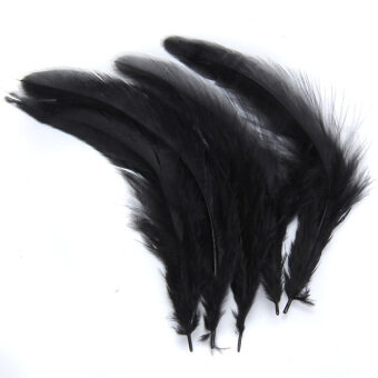 Harga Dyed Rooster Cock Feather Black