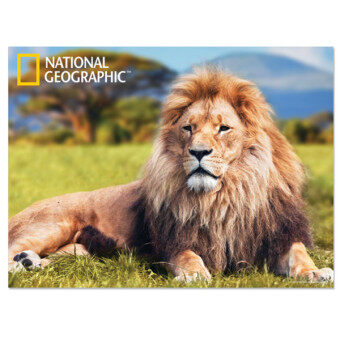 Harga National Geographic 3D Poster - African Lion