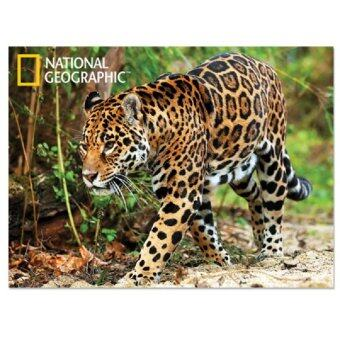 Harga National Geographic 3D Poster - Jaguar