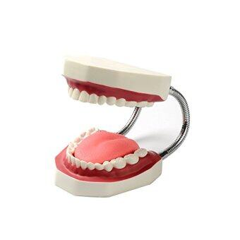 Harga Teeth Model - Dentist Teaching Oral Hygiene Model