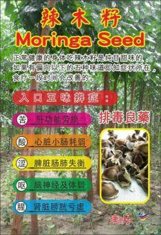 Harga Moringa Seeds 500 g 辣木籽 Natural Health Supplement