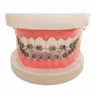 Harga Vinmax Dental Teach Study Adult Oral Demonstration Teeth Model With Brackets